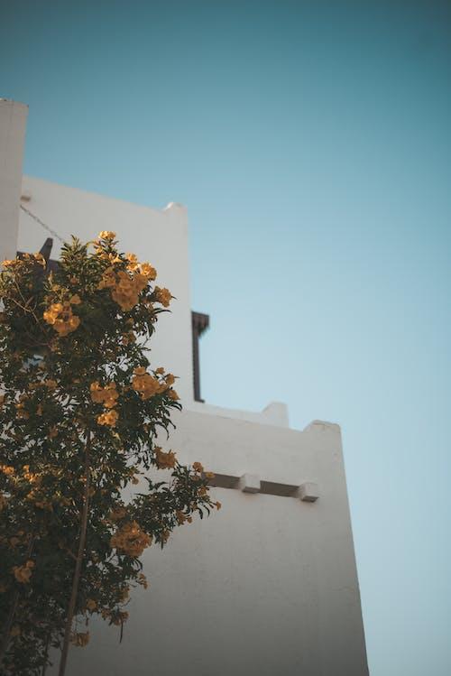 Foto d'estoc gratuïta de arbre, arquitectura, color, edifici