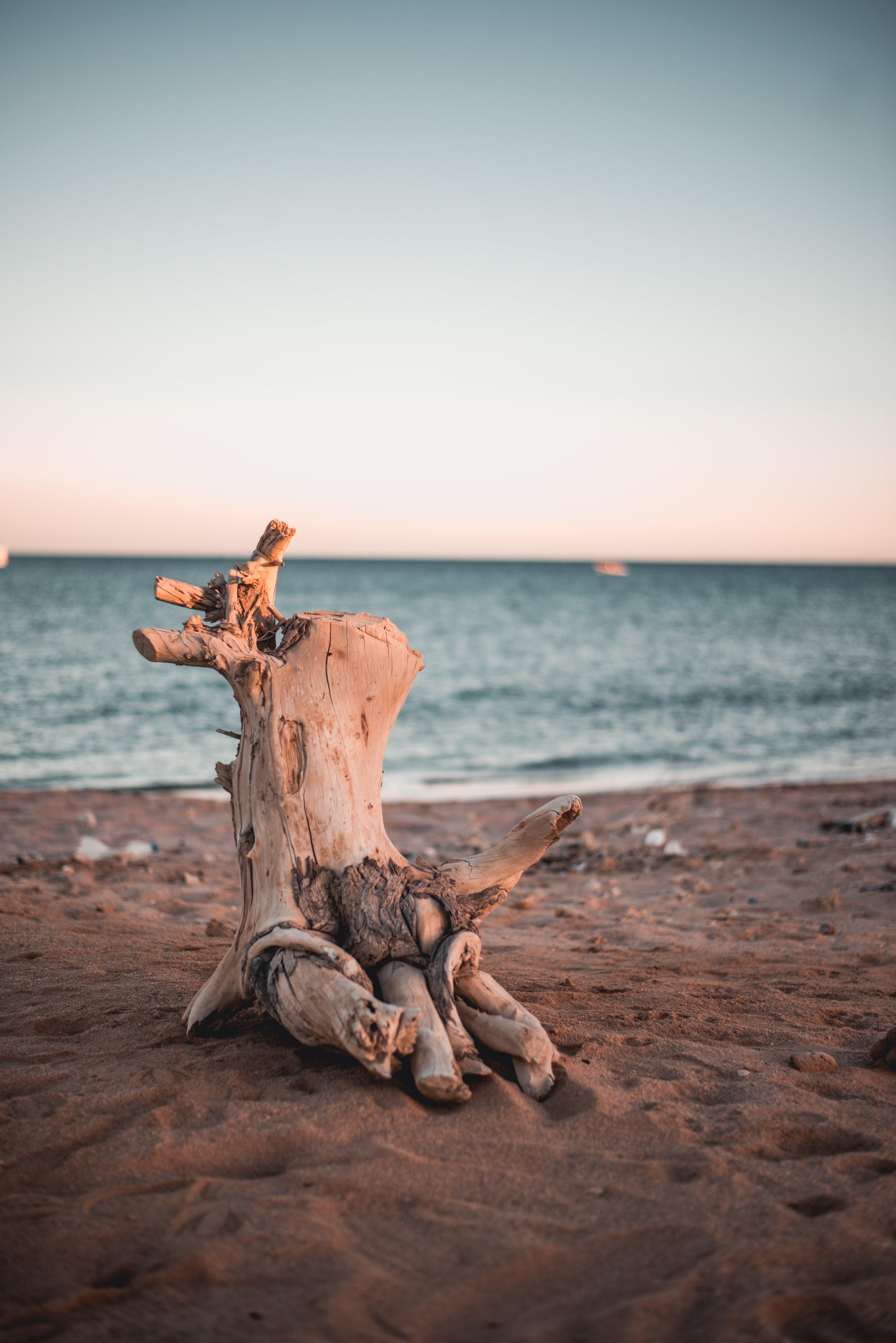 Ingyenes stockfotó ég, fa, homok, horizont témában