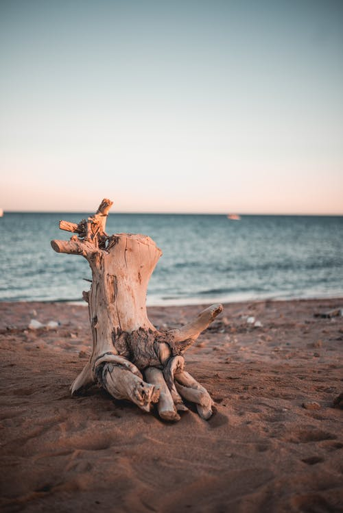 Photo of Driftwood on Sand