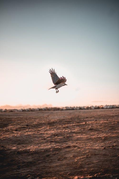 Foto d'estoc gratuïta de alba, animal, capvespre, mar