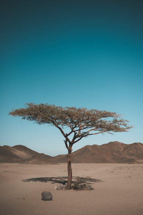 Бесплатное стоковое фото с дерево, засушливый, песок, природа