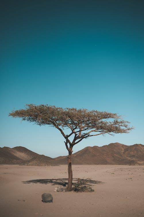 Tree At The Desert