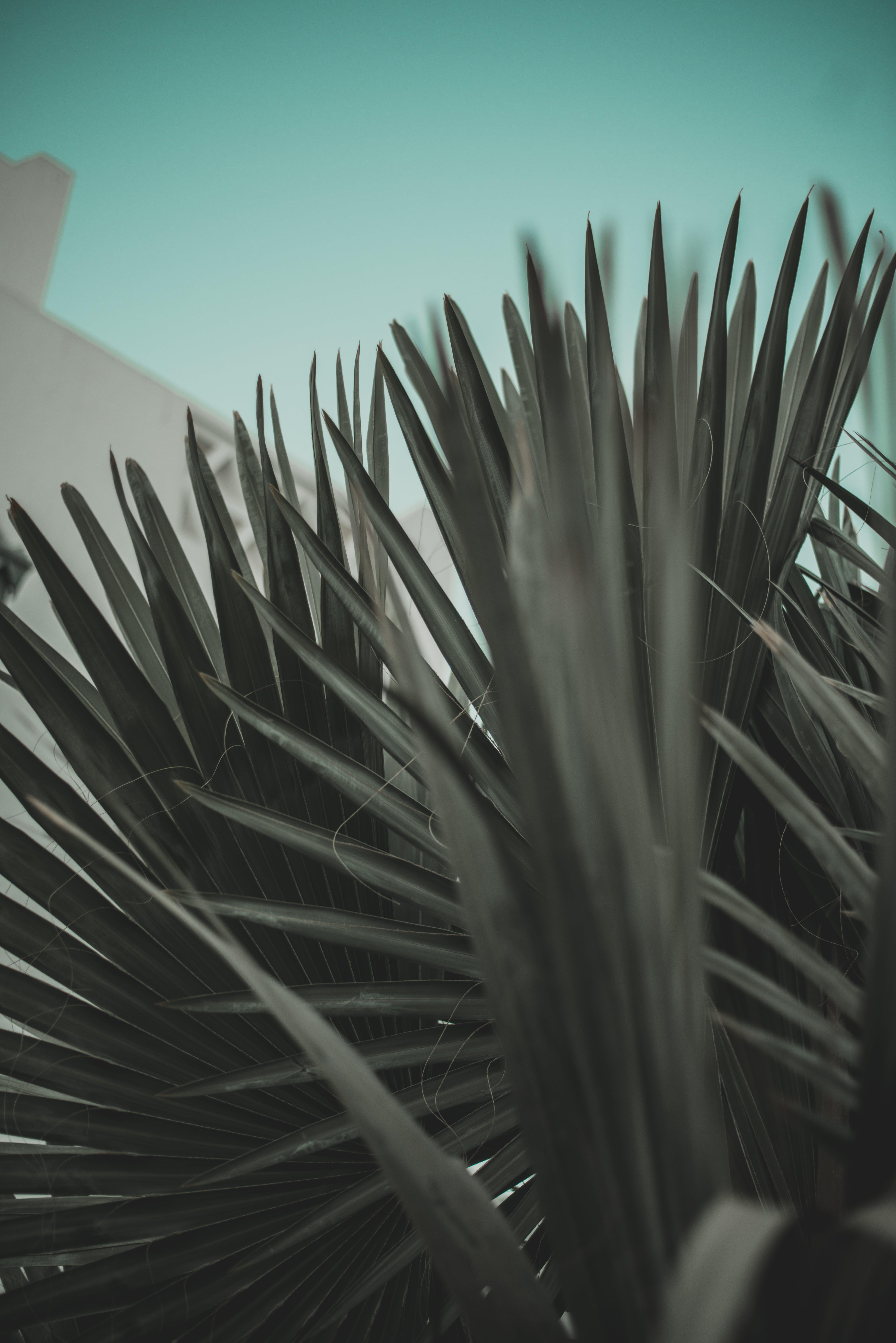 Foto profissional grátis de planta