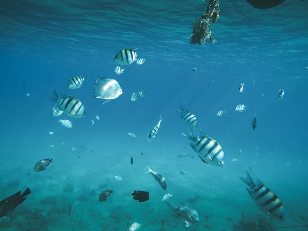 assoeted, balıklar, Biyoloji