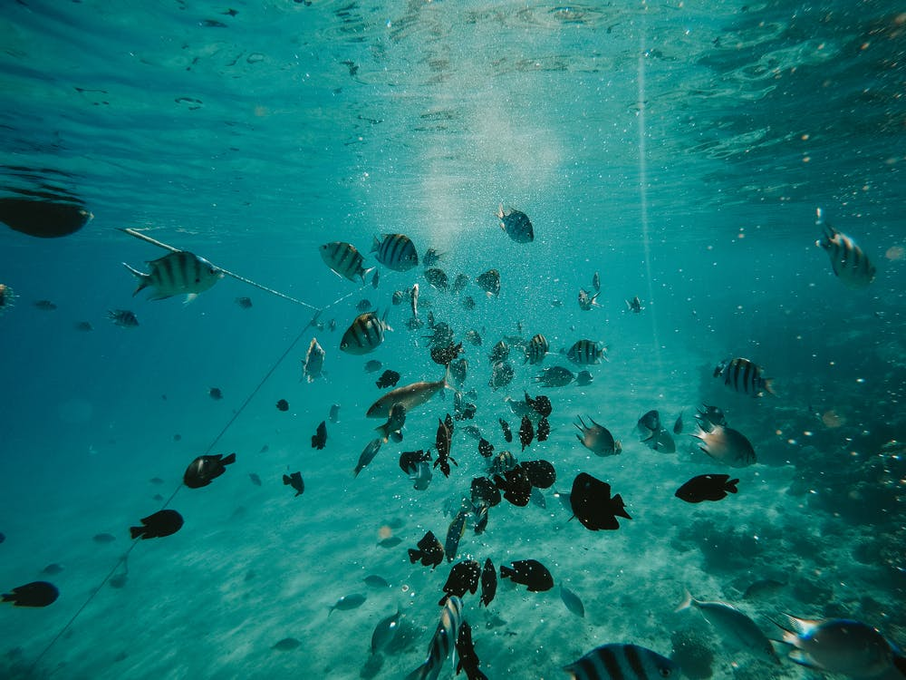 Underwater Photo of Fishes