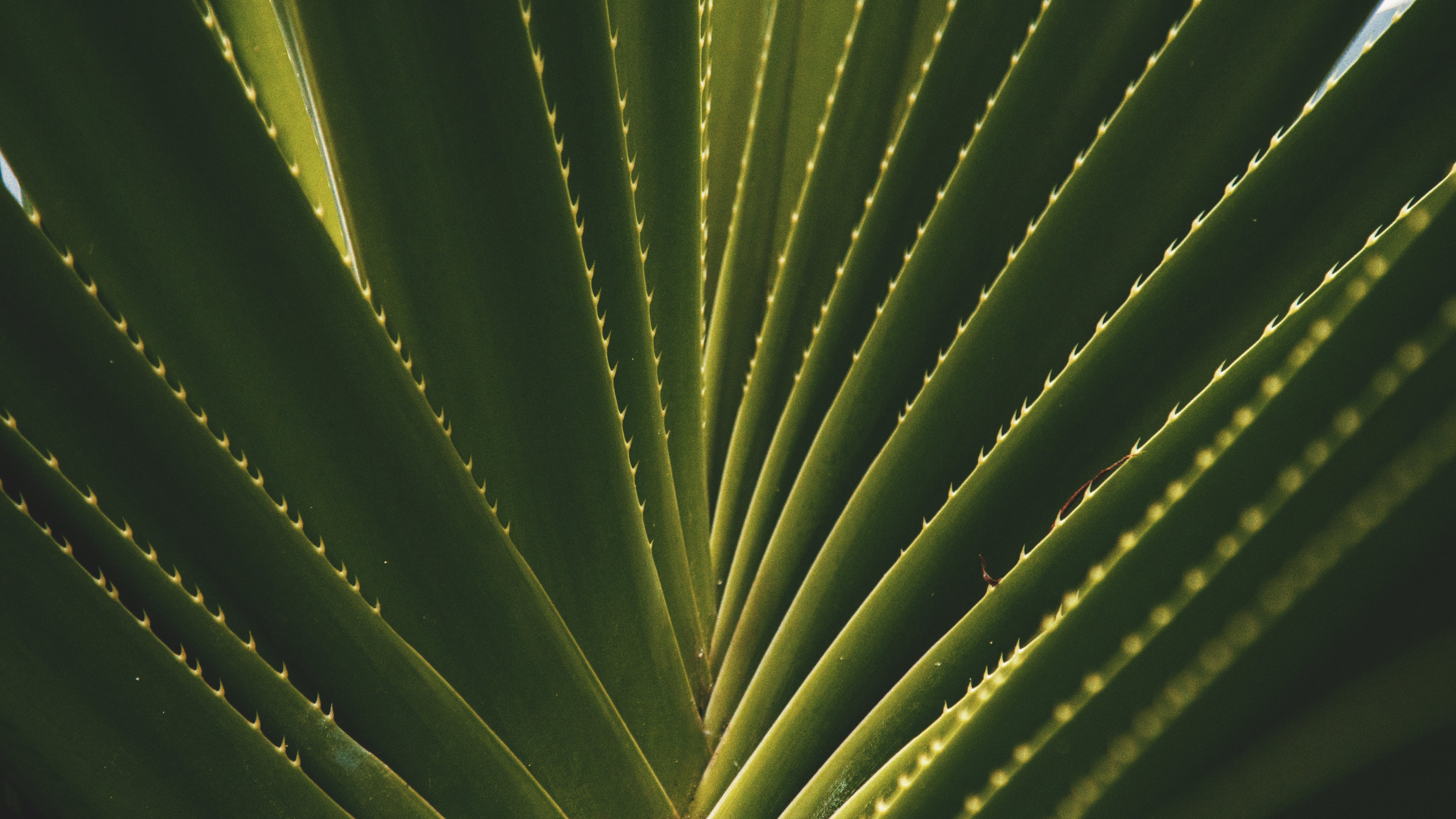 Macro Photography of Leaves