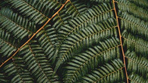 Imagine de stoc gratuită din creștere, culoare, ferigă, frunze de ferigă