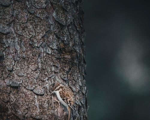 날카로운, 대조, 숲, 야생동물의 무료 스톡 사진