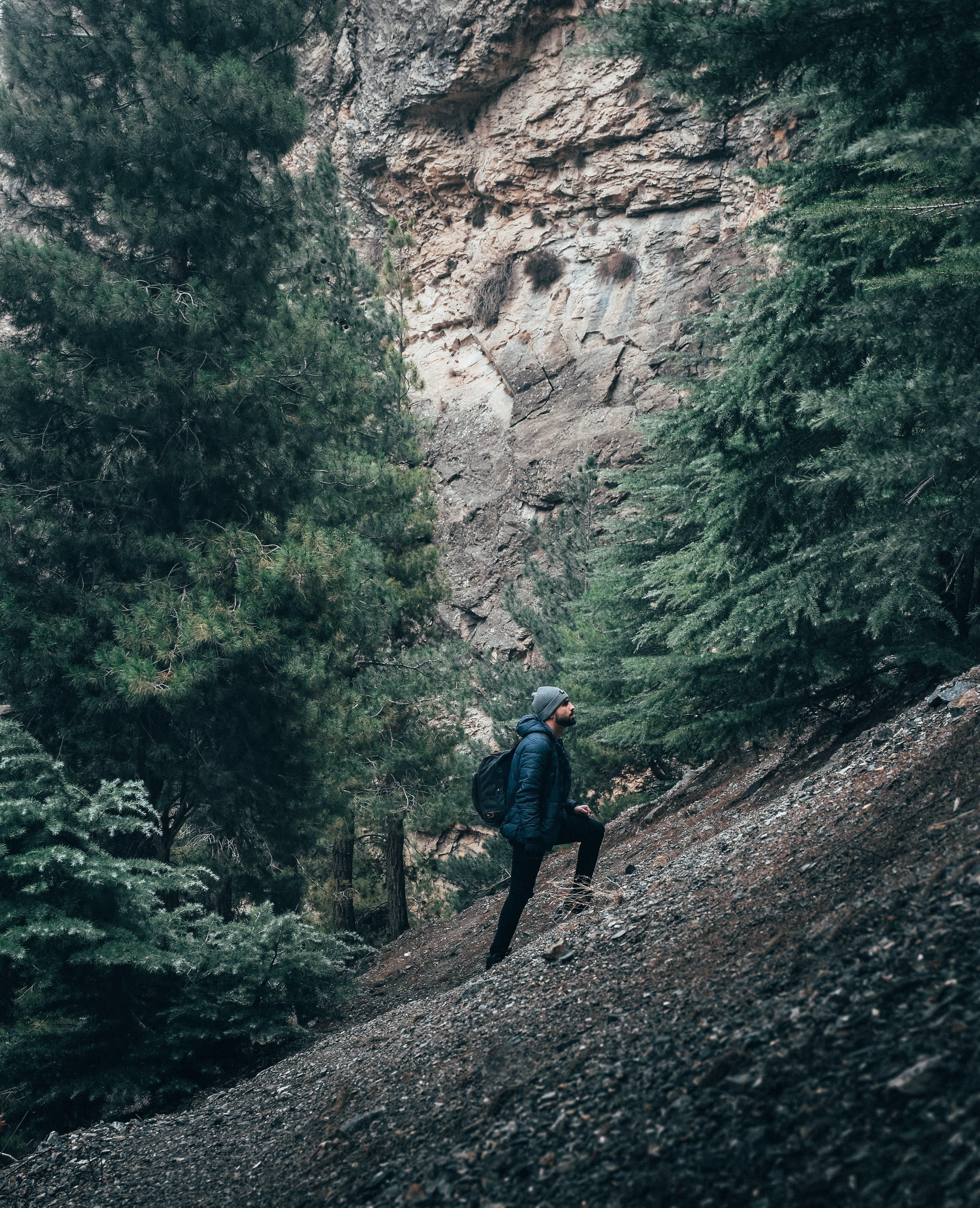 Foto d'estoc gratuïta de alpinisme, alpinista, arbres, aventura