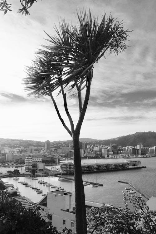 Fotobanka sbezplatnými fotkami na tému dramatická obloha, mraky, námorný prístav, oblaky
