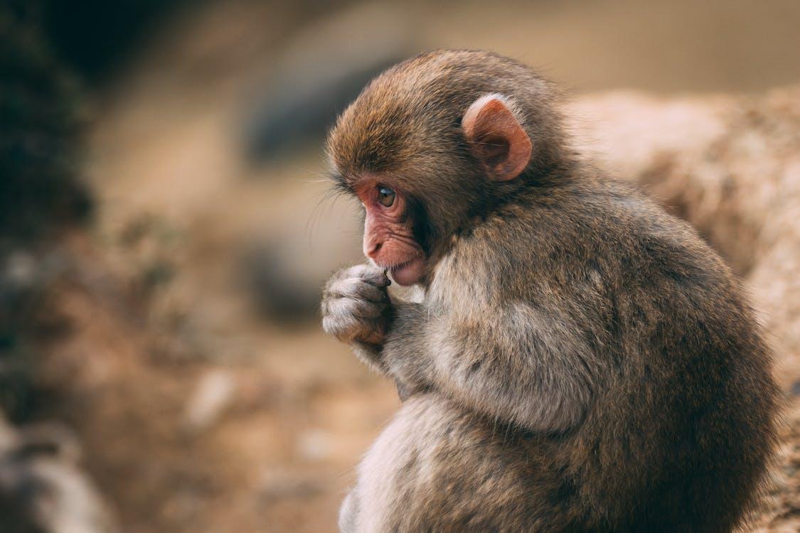 Photo Of A Monkey