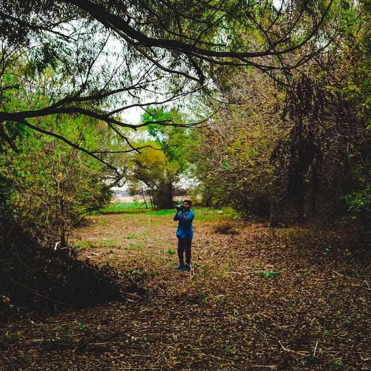cabang, daun gugur, daun jatuh
