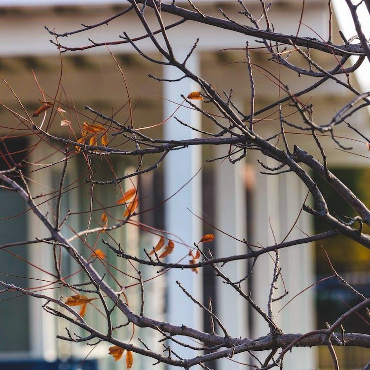 листопад, осенние цвета, падающие листья