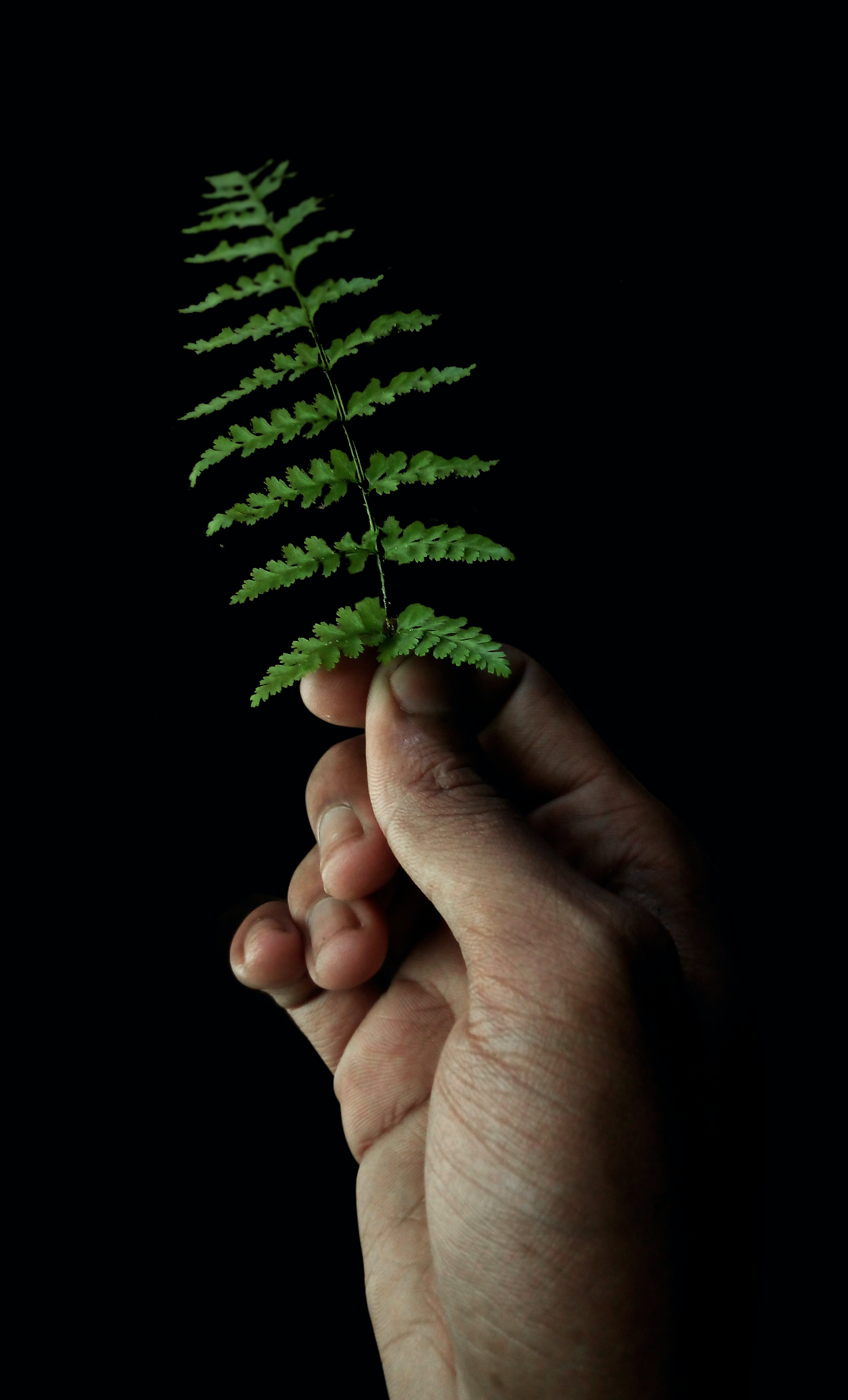 Free stock photo of by hand, darkness, green leaf, night photography