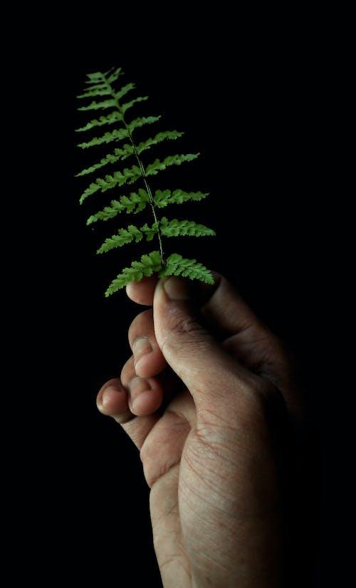 Gratis stockfoto met donker, groen blad, nachtfotografie