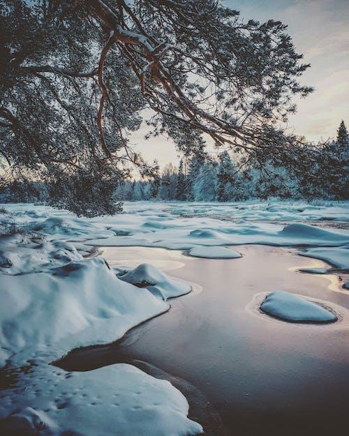 Immagine gratuita di alberi, congelato, freddo, gelo