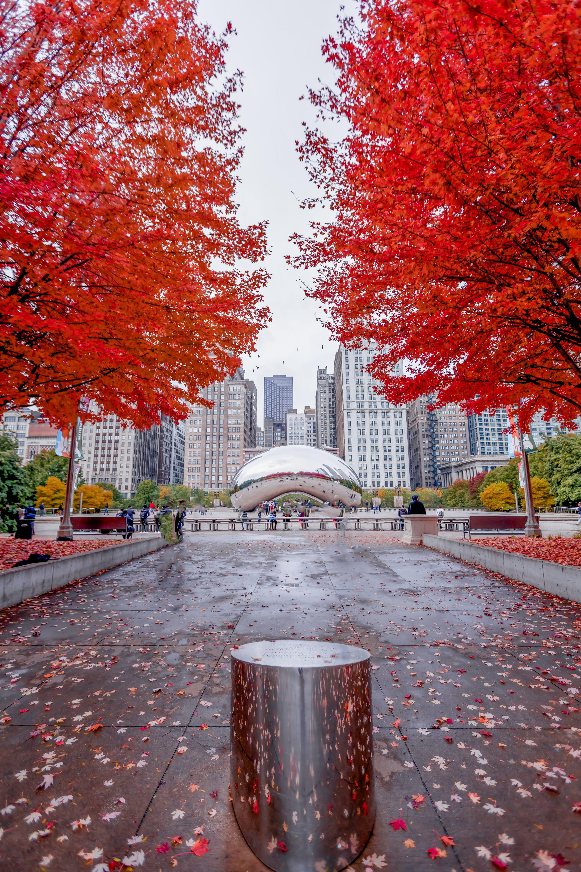 Бесплатное стоковое фото с боб, деревья, кленовые листья, облачные ворота