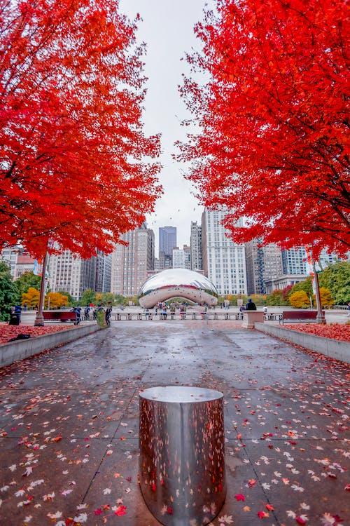 ชิคาโก, ต้นไม้, ถนน