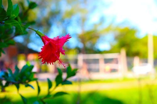 Gratis lagerfoto af flor