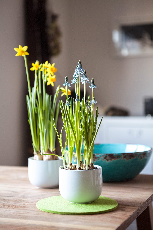 Δωρεάν στοκ φωτογραφιών με ανθίζω, άνθος, βάζο, γλάστρες με φυτά