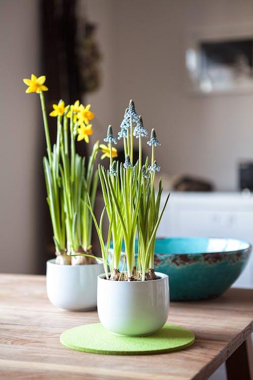 Ảnh lưu trữ miễn phí về cái bình hoa, chậu cây, hệ thực vật, hoa