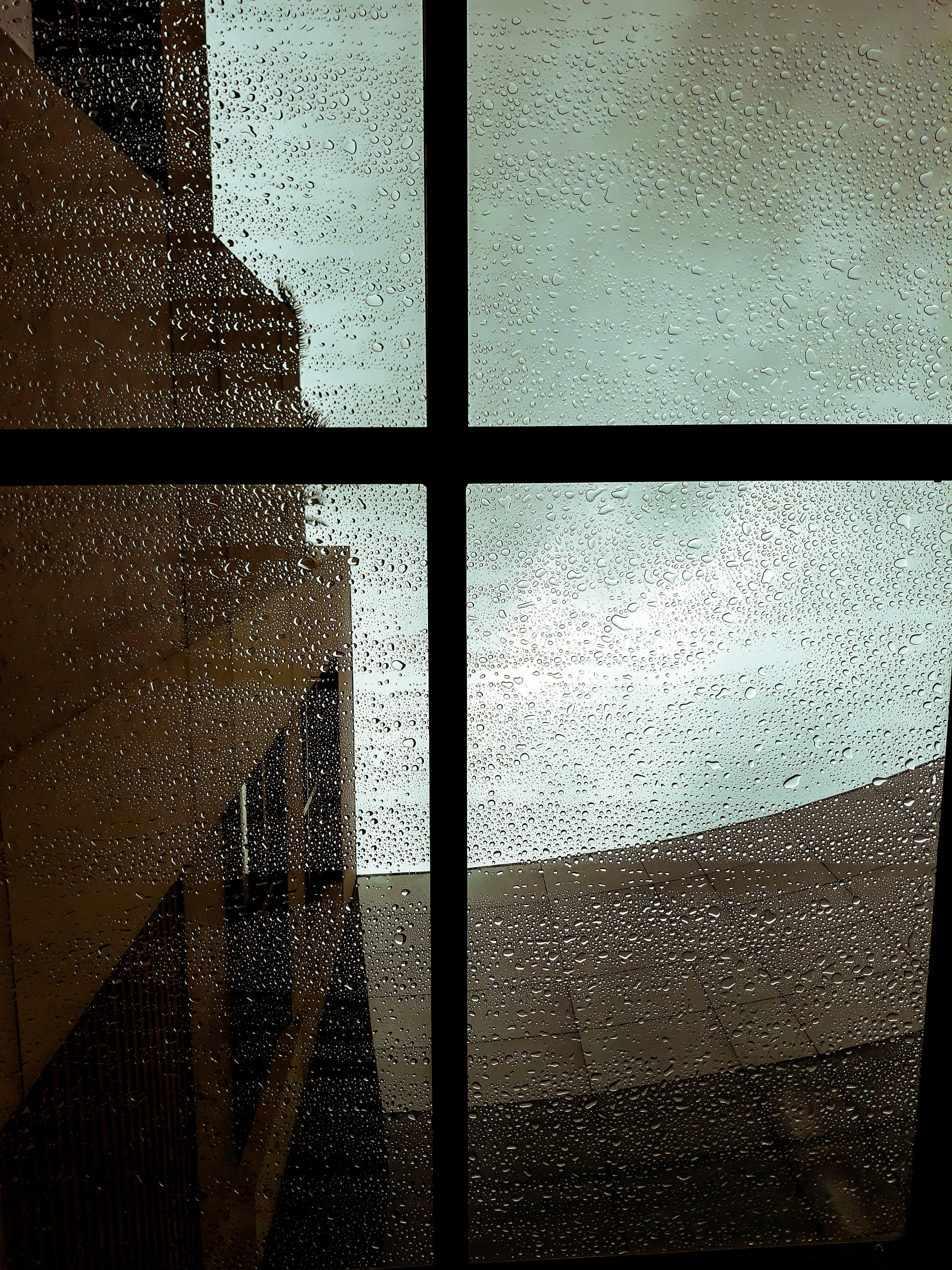 Δωρεάν στοκ φωτογραφιών με βρεγμένος, σταγόνες βροχής