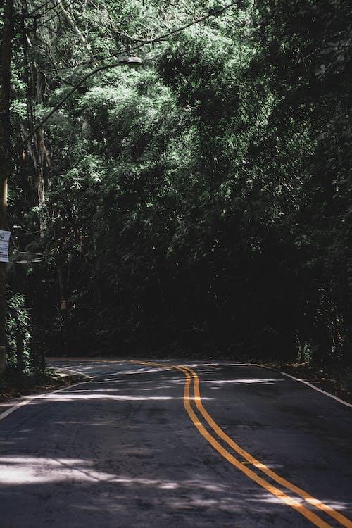 Základová fotografie zdarma na téma asfalt, silnice, stromy