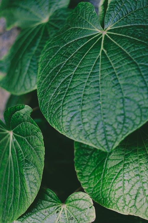 Photos gratuites de centrale, croissance, jardin, vert