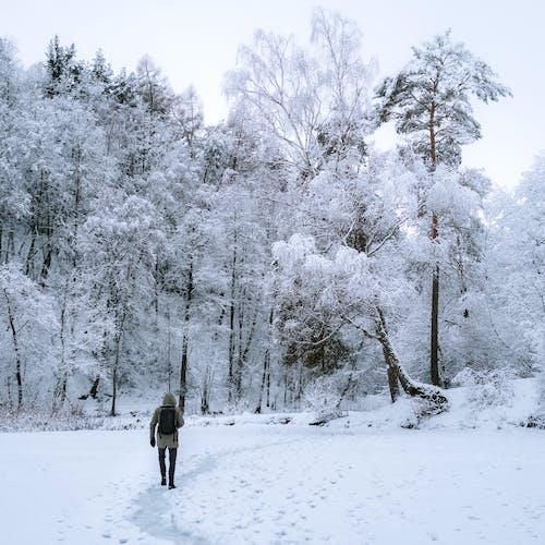 Základová fotografie zdarma na téma les, litva, mráz, osoba