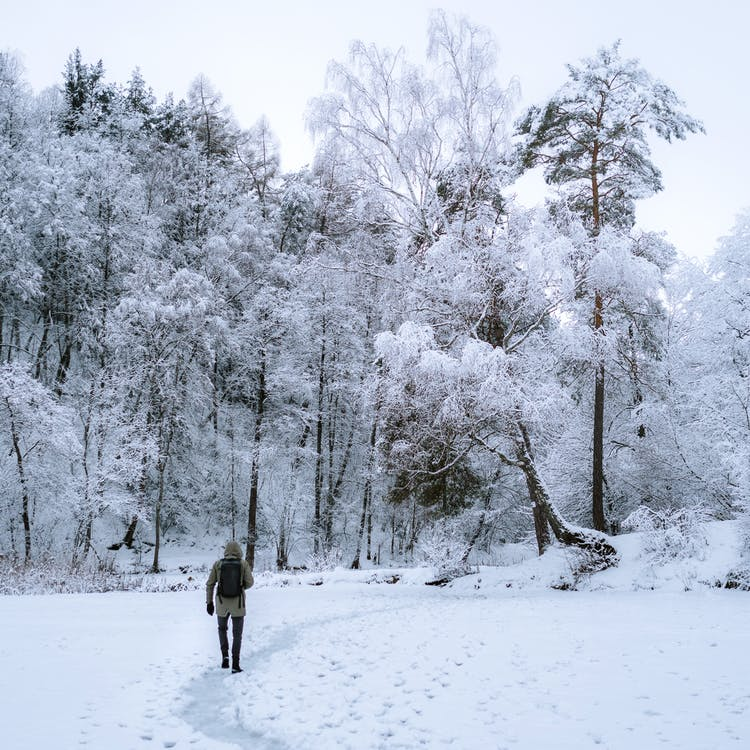Person Walking Towards Trees Covered By Snow