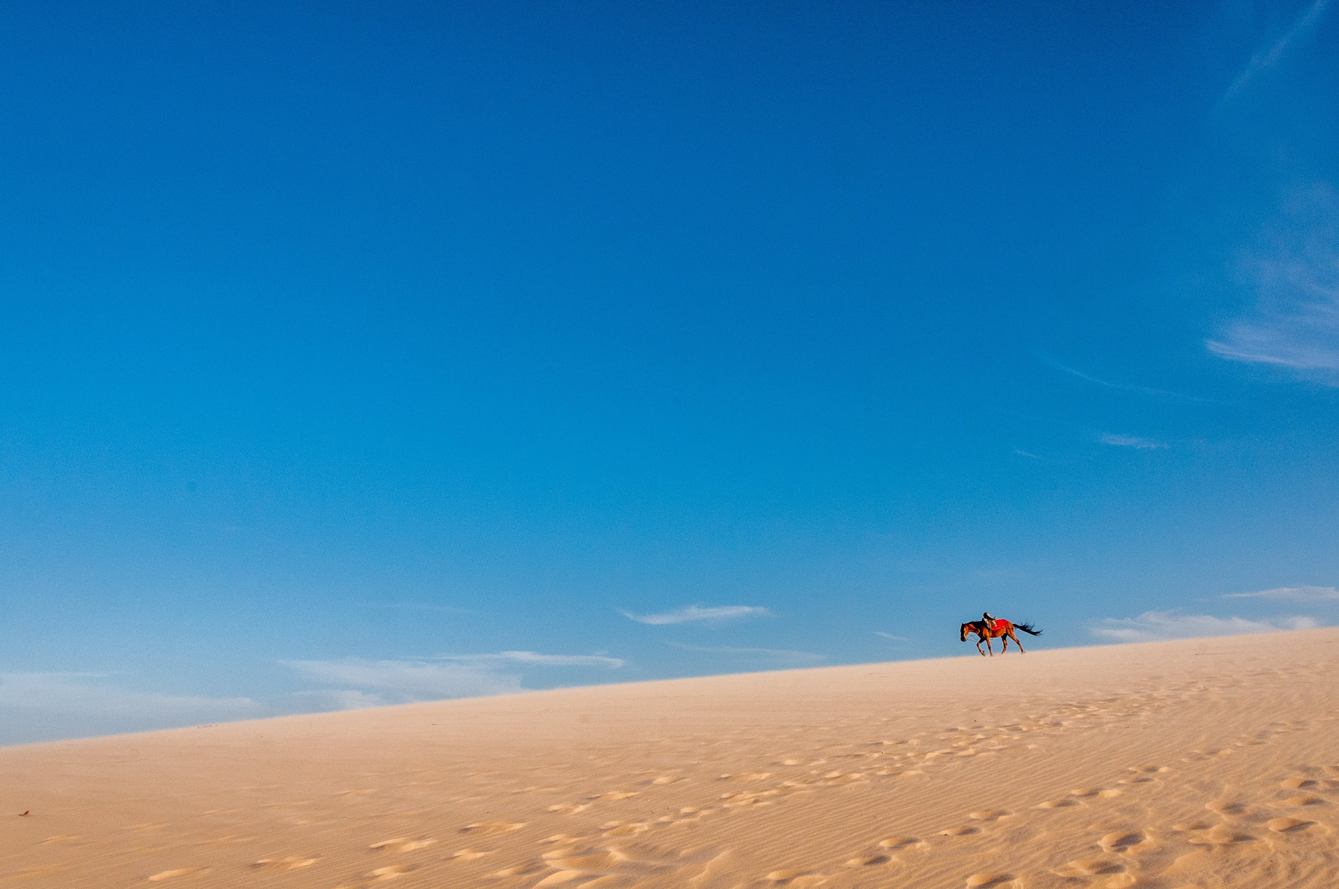 Kostenloses Stock Foto zu düne, pferd, sandstrand