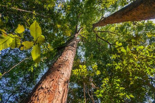 Gratis lagerfoto af skov, træ