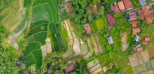 印尼, 空中拍攝, 農地, 農場 的 免費圖庫相片