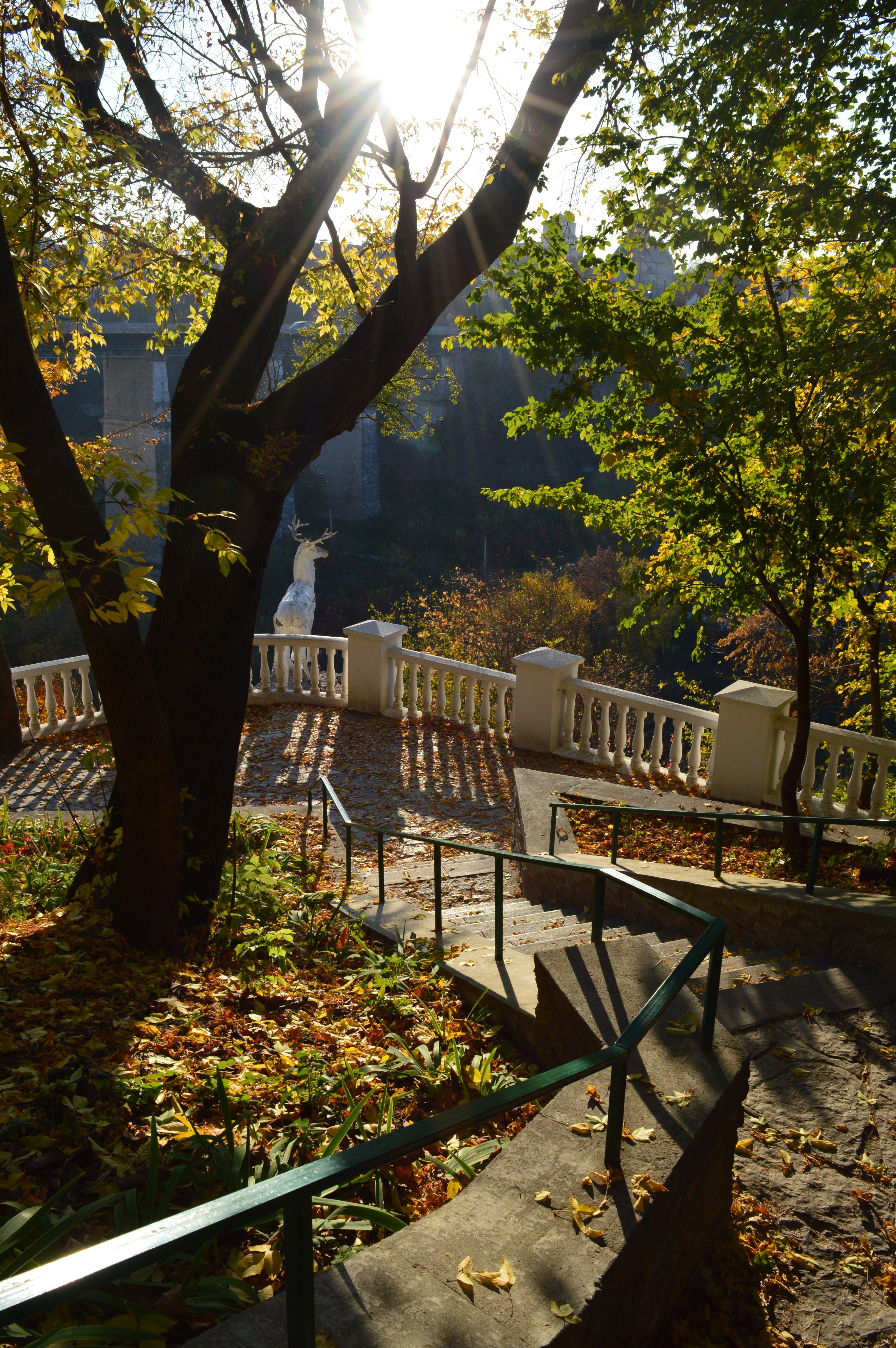 Free stock photo of autumn, city, deer, fall