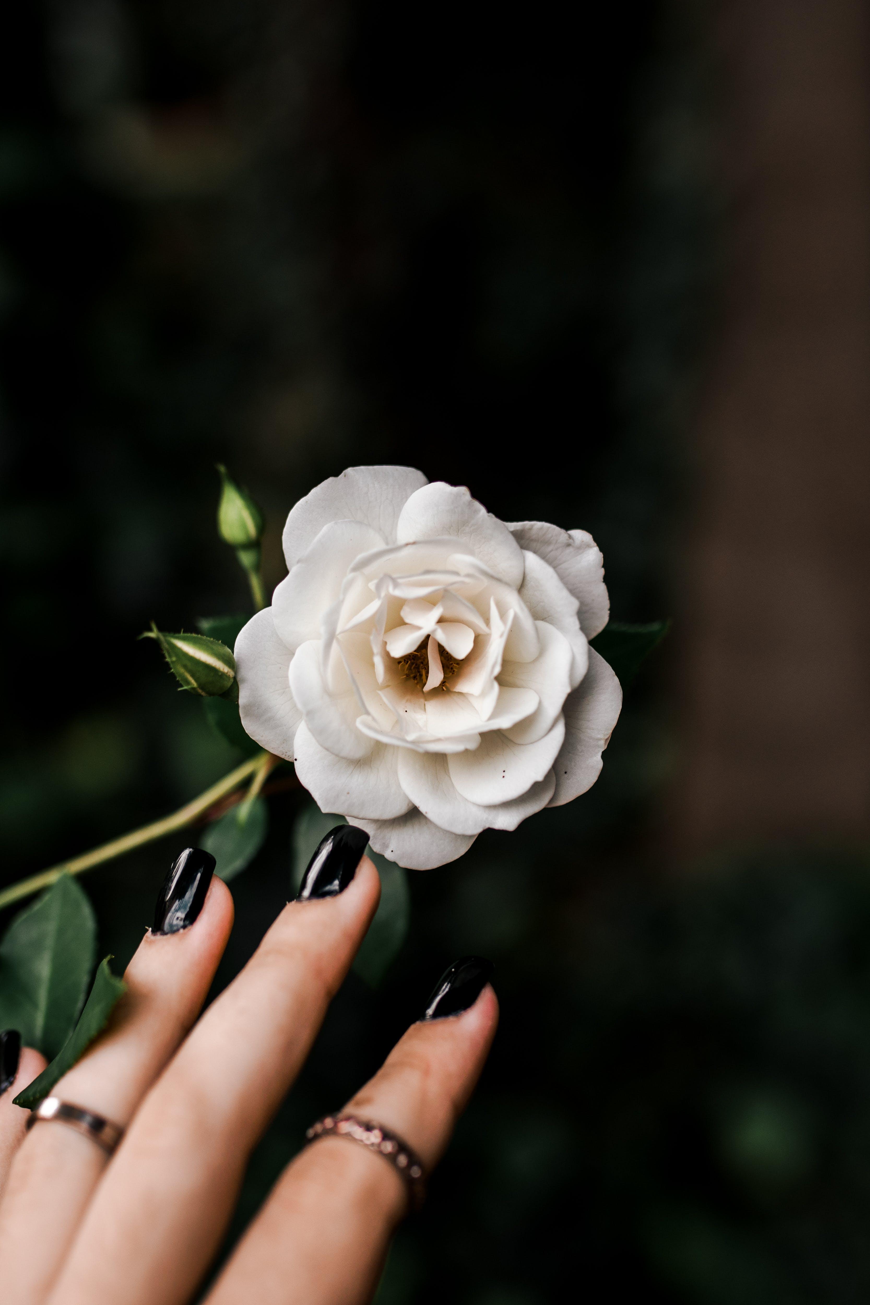 Woman Touching White Flower