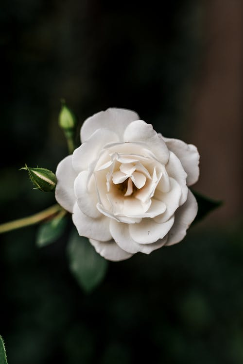 Ilmainen kuvapankkikuva tunnisteilla kasvi, kasvikunta, kukinta, kukka