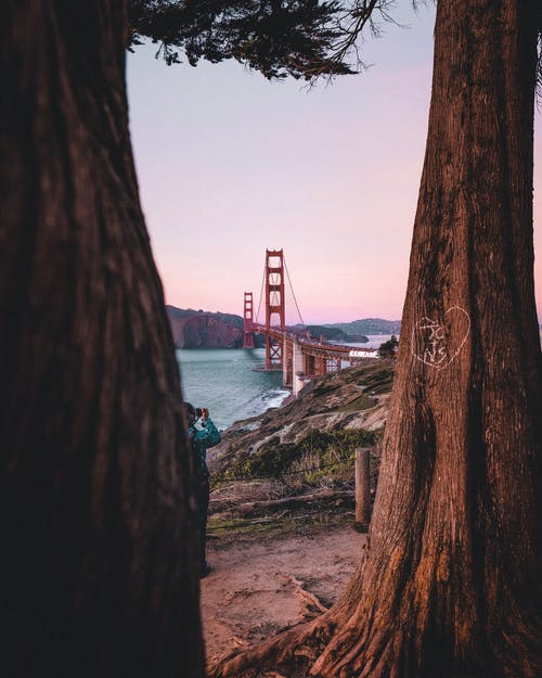 Photos gratuites de arbres, architecture, baie, Bay Bridge