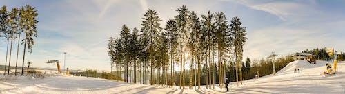 Безкоштовне стокове фото на тему «гірськолижний курорт, дерево, заголовок, зима»