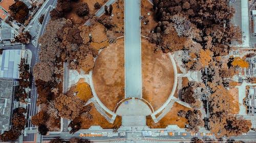 Foto d'estoc gratuïta de arbres, arquitectura, ciutat, foto aèria