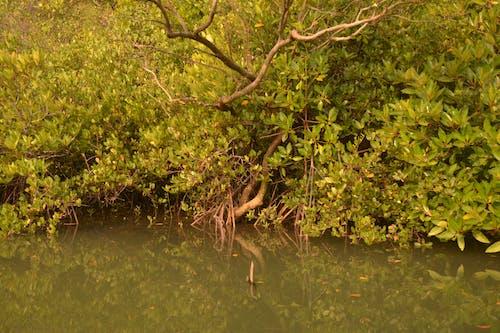 Ingyenes stockfotó dzsungel jelenet, folyó dzsungel, szépség a természetben, természet háttér témában