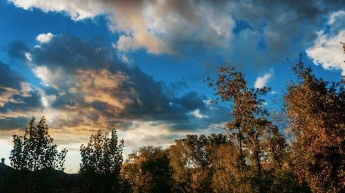 夕日, 日没, 木, 空の無料の写真素材