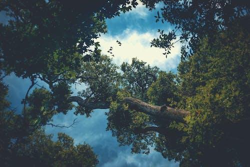 木, 空, 自然, 雲の無料の写真素材