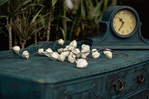 Kostenloses Stock Foto zu antik, blau, blumen, container