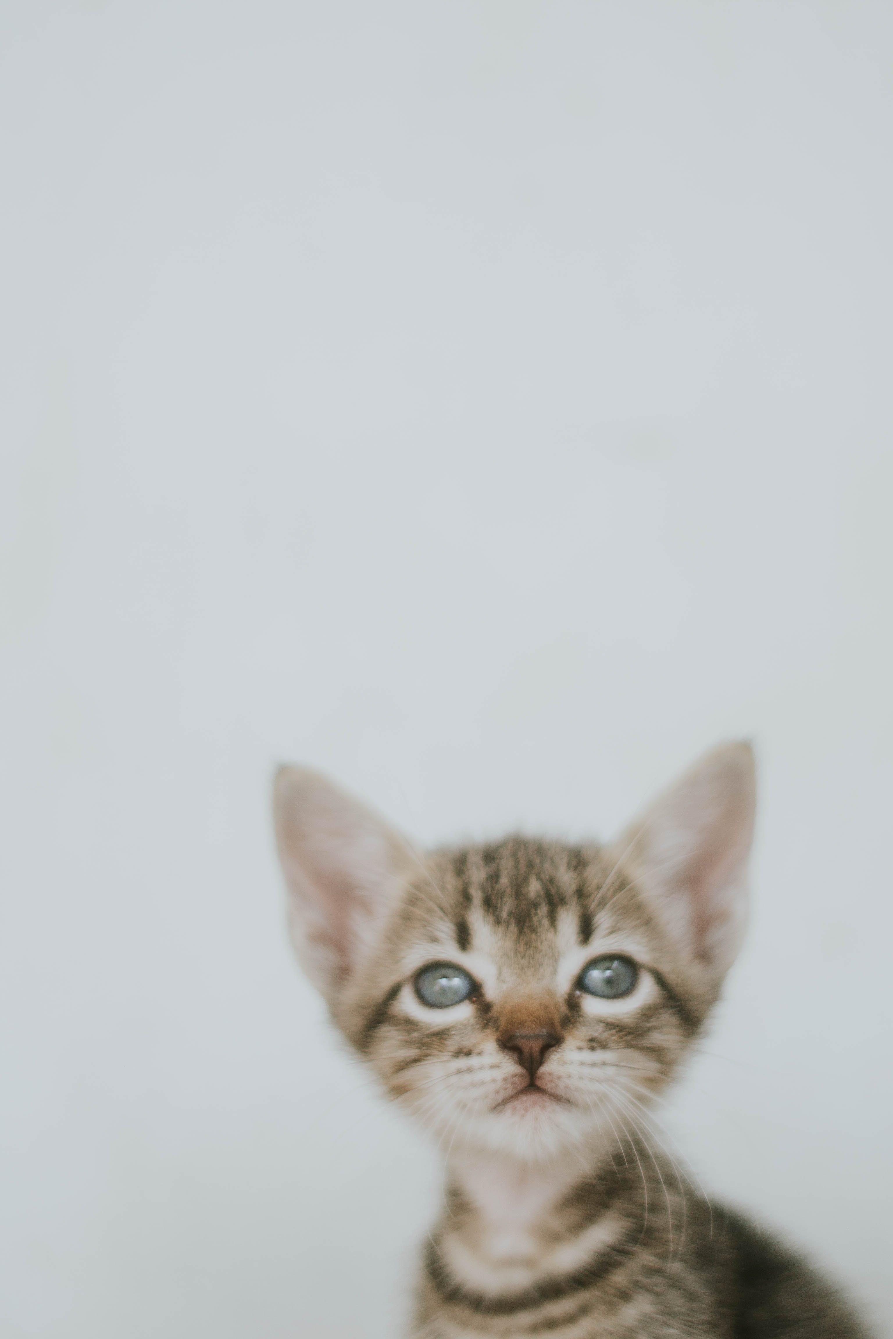 Close-Up Photo of Tabby Kitten