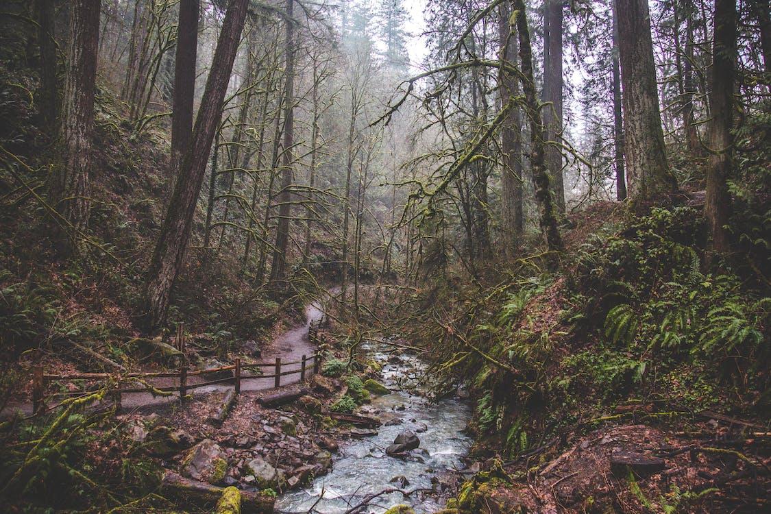 Безкоштовне стокове фото на тему «атмосферний, вічнозелений, мати-природа»