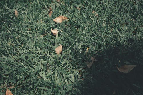 Ảnh lưu trữ miễn phí về câu thơ, cỏ, folhas, giấy bạc