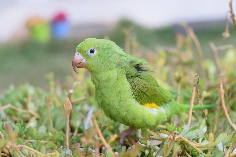 Free stock photo of bird, grass, green bird, nature