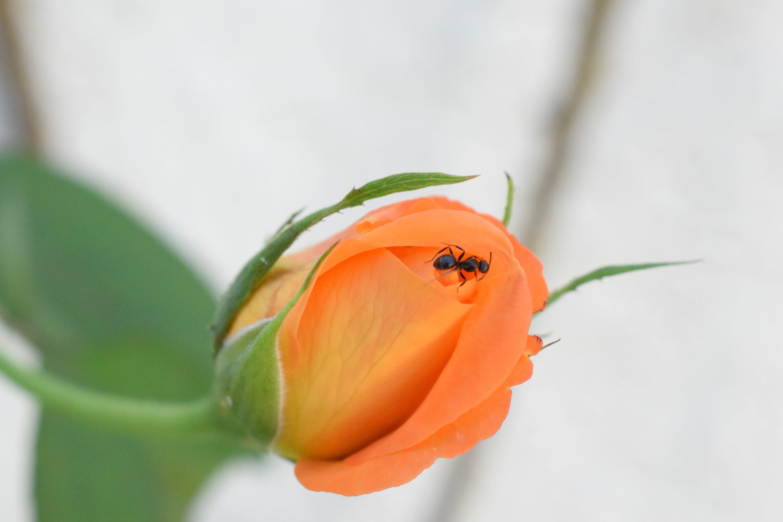 Free stock photo of ant, backyard, beauty, defocused