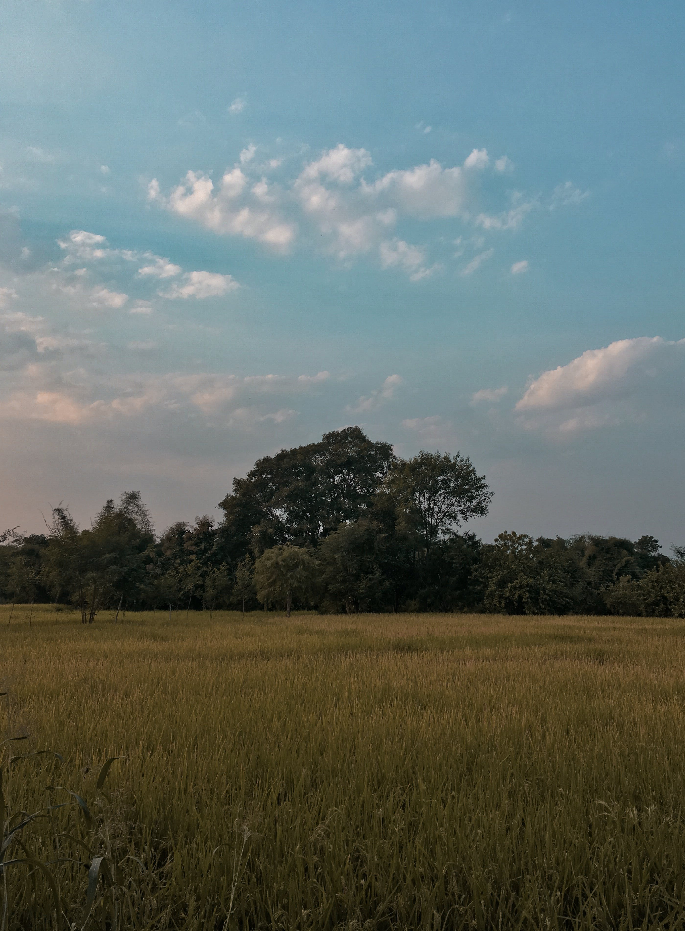 Free stock photo of farm, landscape, tree