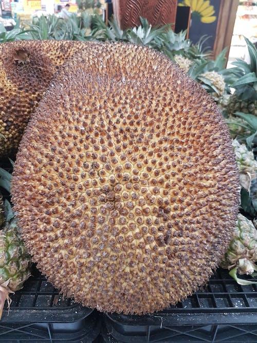 #indonesia #jakarta #muslim #durian 的 免費圖庫相片